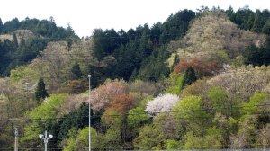 早春の里山 今須付近