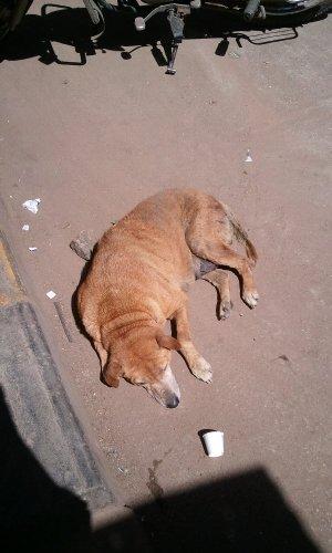 寝る犬 バンガロール Chickpete