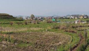 桜井市箸中付近から見る大和三山