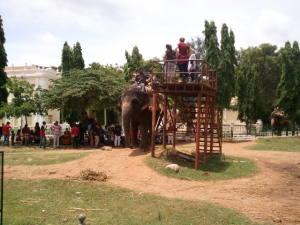 マイソール宮殿の象