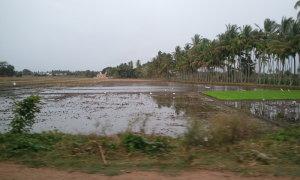 南インドの田園風景